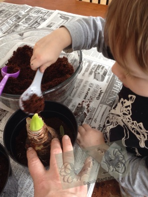 Test the level of soil by placing a bulb on top (ask for help! children love to help).  You want each full enough so that the bulb will be 7/8 covered with soil once planted, with about an inch of pot above the soil level for ease of watering later.