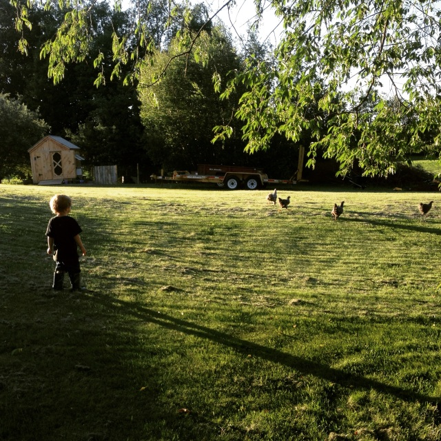 long shadows on a summer evening with chickens and child