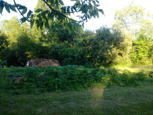 and the garden a week later