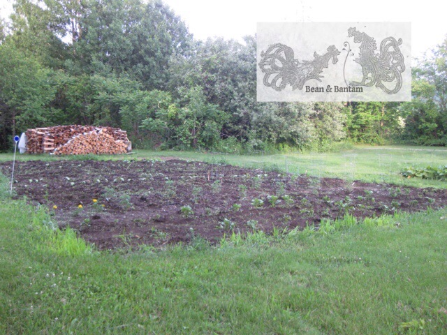 the garden shortly after planting: potatoes, tomatoes, peppers, chard, marigolds, bush beans, corn, cucumbers, and pumpkins this year (plus a few watermelons I snuck in).