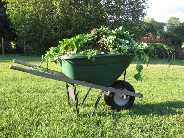 Wheel barrow load of weeds