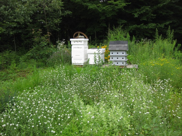 weeds and wildflowers are beneficial to pollinators and planting a pollinator garden can assist wild pollinators