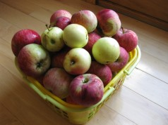 A basket of apples that my dehydrator will just hold once peeled, cored, and sliced.