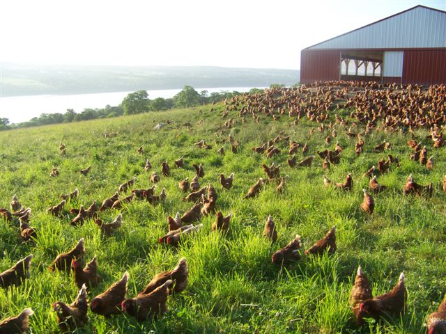 Handsome Brook Farm, one of the Inc. 500 fastest growing companies for 2015, selling eggs from pasture-raised hens. Photo courtesy of Handsome Brook Farms.