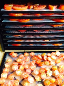 Bean & Bantam: dehydrating tomatoes
