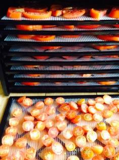 Bean & Bantam: dehydrating tomatoes