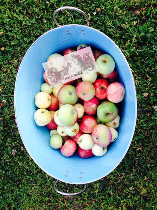 Fall abundance in Vermont