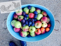 Bean & Bantam: Apples and plums from our own trees