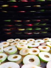 Bean & Bantam: dehydrating apples