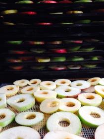 Bean & Bantam: dehydrating apples