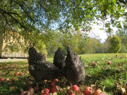 Bean & Bantam all rights reserved