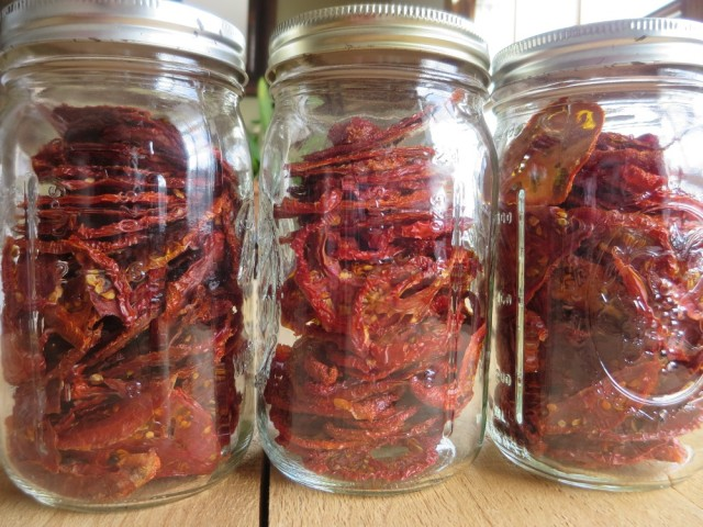 Mason jars of dried tomatoes, dehydrated in August and stored for winter cooking.