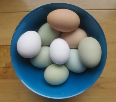Take the mystery out of making omelets. Create a fluffy light broiler finished omelet with free range eggs by Bean & Bantam