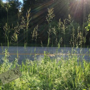lacy backlit grass against a blacktop road