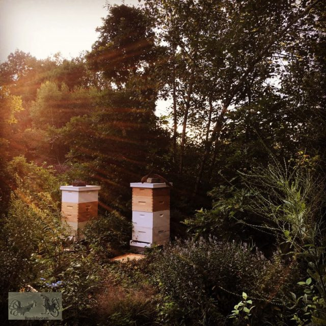 Beehives in the Wild Garden at sunset